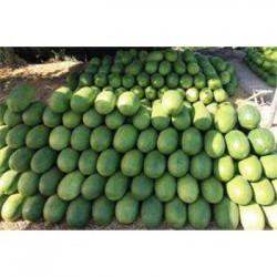 西瓜销售批发市场-山东聊城许营西瓜