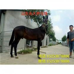 平桂管理区买马怎么运输