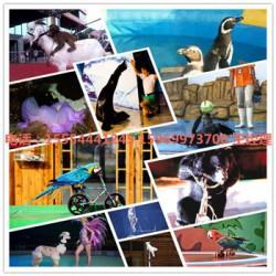 怀化企鹅租赁展览出租马戏团表演