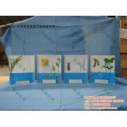 水稻生长史标本|雨林教育|标本