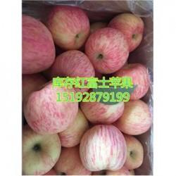 今 日 日照今 日 红富士苹果75以上价格高吗