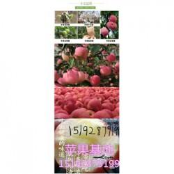 今 日 元旦膜袋红富士苹果营养价值
