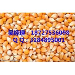 收购玉米|民发养殖|大量收购玉米