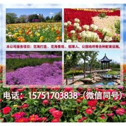 福寿草种子丨江苏春百宝种业
