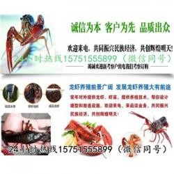 维扬龙虾种苗批发报价龙虾养殖技术指导