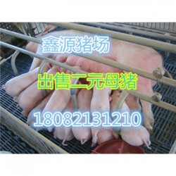 崇左北京黑母猪厂家价格