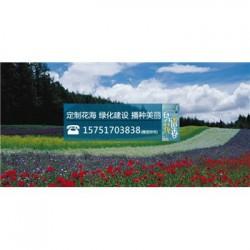 红秋葵种子丨江苏春百宝种业