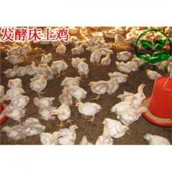 发酵床养鹅用什么牌子的菌种 多少钱一盒