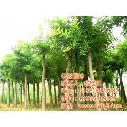 北京国槐树苗_亿发园林中心_3公分国槐树苗