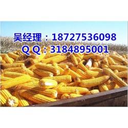 收购玉米大豆的地方,玉米大豆,民发养殖(查