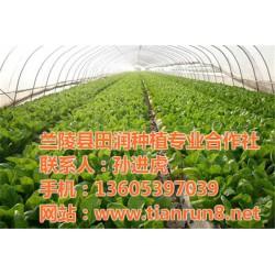 供应有机蔬菜、有机蔬菜、田润蔬菜批发(查
