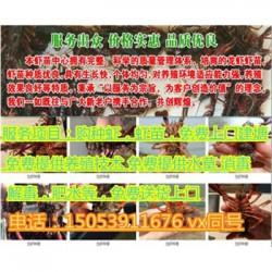 冠县龙虾苗多少钱一斤—龙虾繁育基地